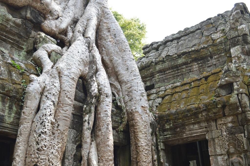 Ta Phrom - Angkor Cambodia