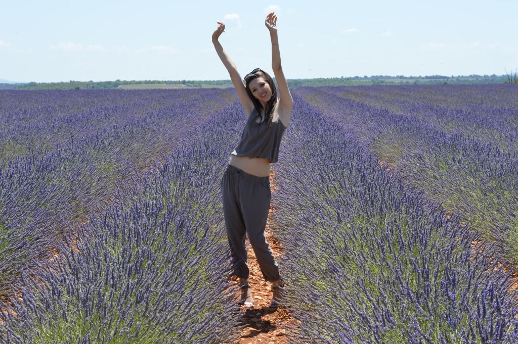 Blooming lavander, Provence